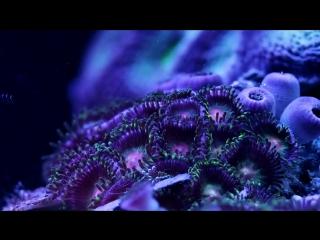 Морские цветы