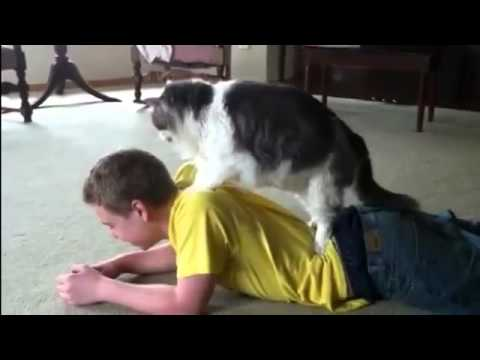 Cat massage compilation