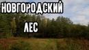 Таинственные места России - Новгородский лес