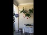 Отдых в Абхазии ( Каштак )☀️🌴😎 ОТЗЫВЫ — Live