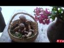 Ли ЦзыЦи - ДЕВУШКА С ХАРАКТЕРОМ! Печка-гриль своими руками. Лесные грибы на гриле.