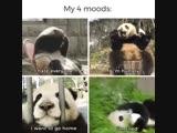 Моё настроение в 4 пандах