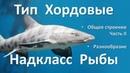 12 2 Рыбы часть II 7 класс биология подготовка к ЕГЭ и ОГЭ 2018