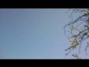Весна.Цветет грушевый сад.