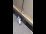 Taube will nicht fliegen