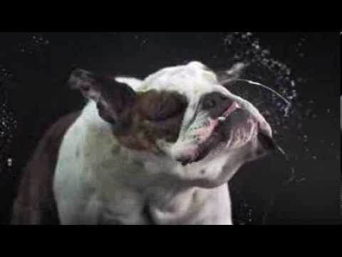 Dogs shaking in slow motion