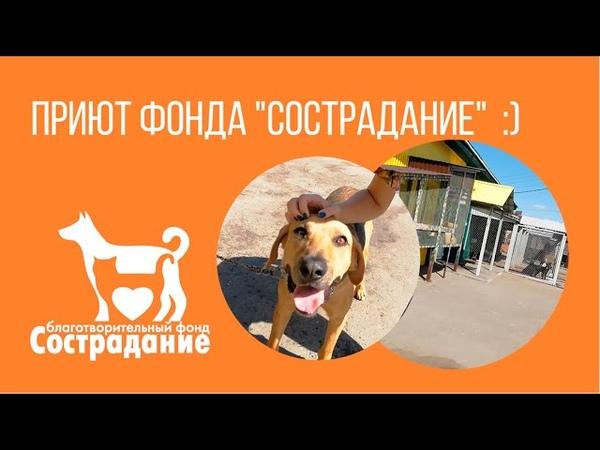 Приют фонда Сострадание. Нижний Новгород.