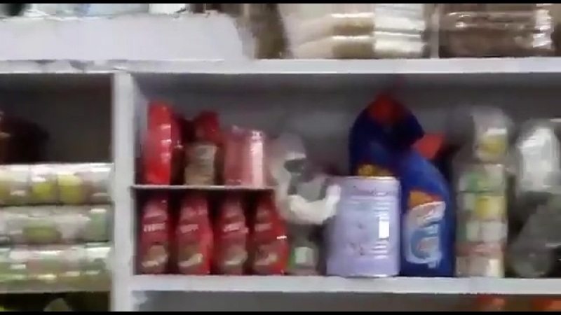 Крысиная разборка
