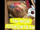 Маленький ленивец потерял маму!