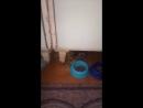 котенок Смурфик