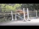 Плей Бой прыжки в шпрингартене