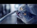 Почему кошкам нельзя пить воду из под крана