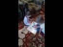 дочка Ладушка с родной племянницей Миланой играют у бабушки с дедушкой🙌 долгожданная встреча 👍