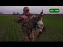 Подготовка и охота на гуся