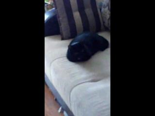 Кошеня ненавидит Машко