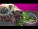 Черепаха Донателло
