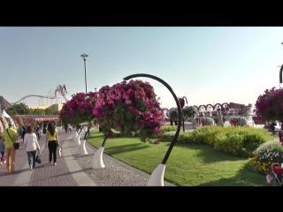 Парк цветов в дубае (dubai miracle garden)-дачники