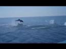 В Сочи дельфины устроили соревнования с моторной лодкой