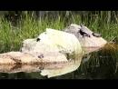 Черепаха и лягушки греются у водоема на солнышке.