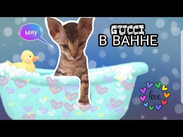 GUCCI в ванне.
