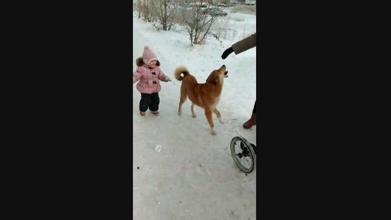 игрища с пёселем львяшасчастьемое и нинико