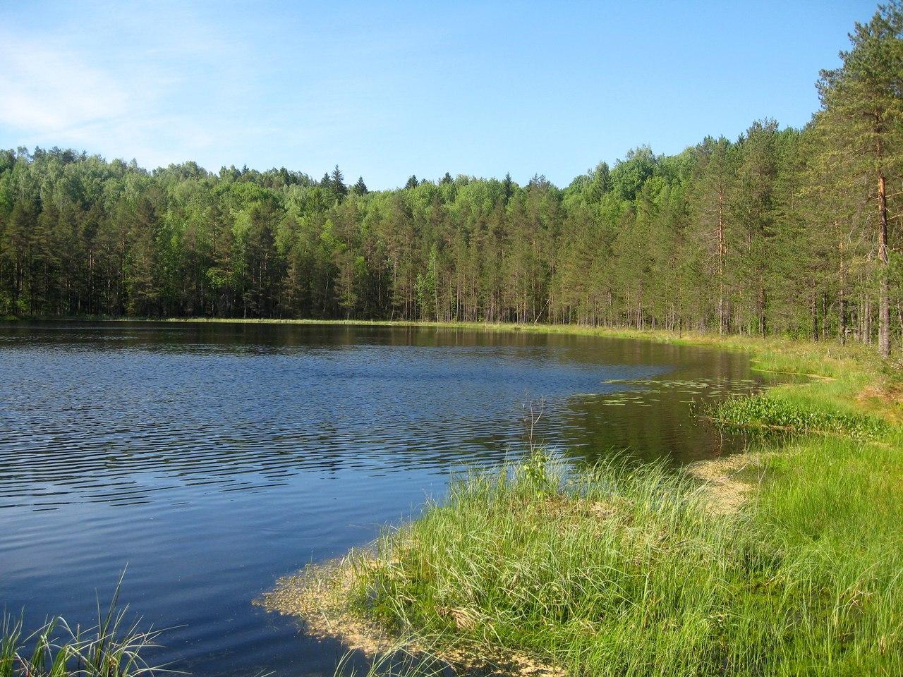 Отчет о походе Шапки - Кирсино-2018. Четыре лесных озера и Царь-дерево. (Много фотографий природы!)
