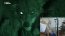 луна и волк кавер на гитаре клип ЛЮБЭ РАЗБОР АККОРДЫ взаимо подписка и клики по рекле