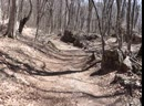 Дорога на Северную Демерджи по лесу.