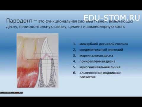 Малоинвазивные методы увеличения поверхности прикрепленной слизистой в области дентальных имплантатов Вебинары Стоматология