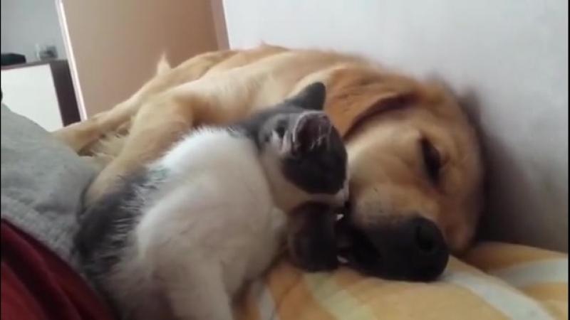 котик и собакин