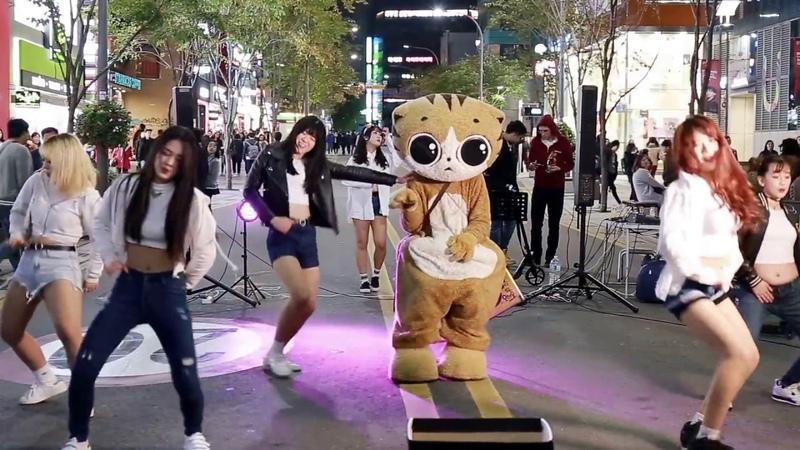 JHKTV]신촌명물고양이댄스 sin chon special cat k pop dance up down ( 위 아래)