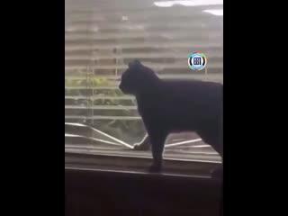 Кажется мой кот хочет свести меня с ума
