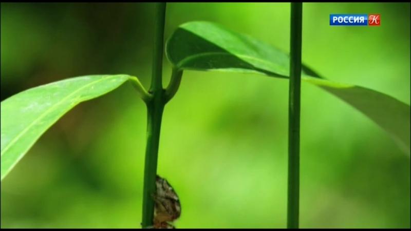 02 Дикая Шри Ланка Заоблачный лес Wild Sri Lanka Forest Of Clouds 2015