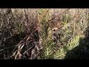 Активисты ЗД СГК поверили Счастливый лес в Рудничном районе Кемерова