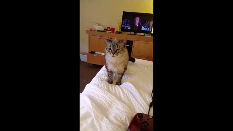 Here is a video of a cat sneezing