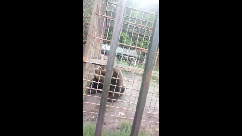 чувашский медведь