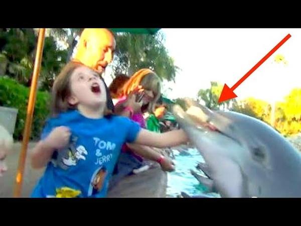 Das passiert wenn Delfine angreifen