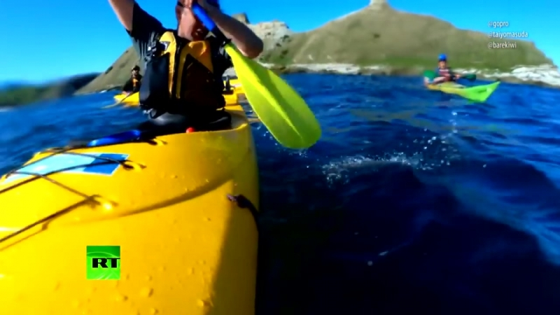 Морской бой_ тюлень ударил каякера по лицу... осьминогом