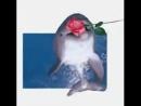 гифка розочка с дельфином