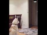 Как собаки реагируют на фокус