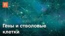 Гены и стволовые клетки курс Сергея Киселева
