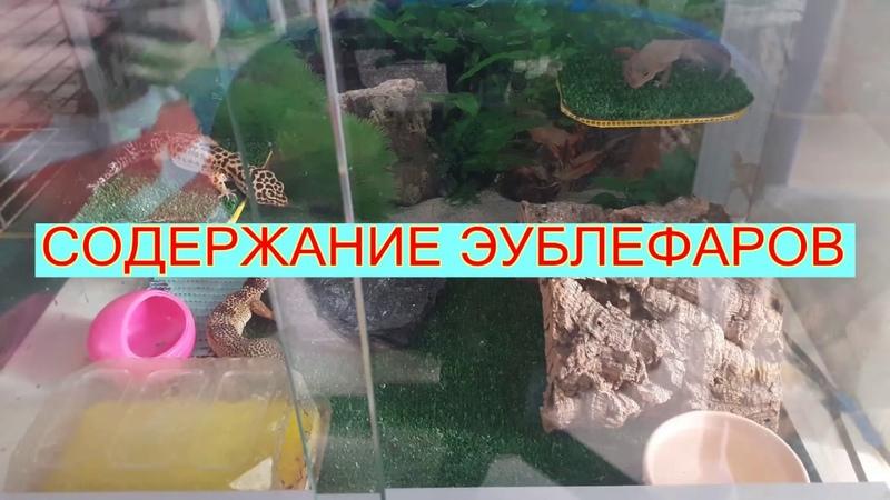 ♥СОДЕРЖАНИЕ ЭУБЛЕФАРОВ♥
