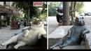 Я РЖАЛ ПОЛ ЧАСА. Смешные Коты и Собаки. ПРИКОЛЫ С ЖИВОТНЫМИ. Cute Cats 122