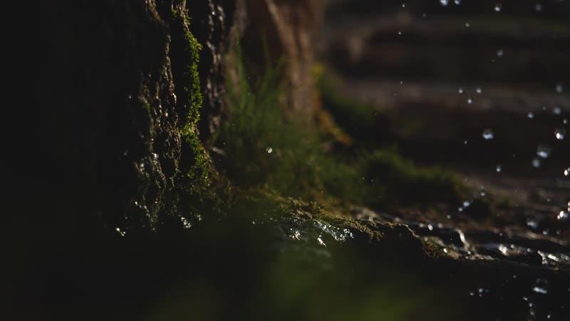Природный парк чудес Кудыкина гора