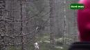Охота на лося в Швеции с собаками часть 2