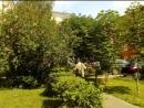 Стрижка кустов по улице Октябрьская в центре Воскресенска