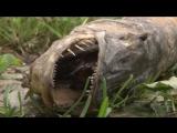 Сюжет ТСН24- В пруду под Ясногорском отравили рыбу