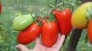 Как правильно применять биопрепараты Ошибки садоводов