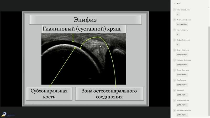 Ультразвуковая морфология и патоморфология костной ткани