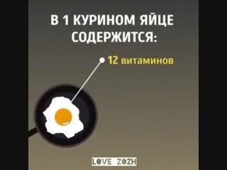 Что будет, если есть яйца каждый день